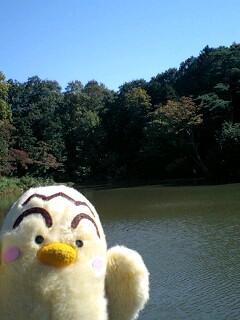 たっちゃん池