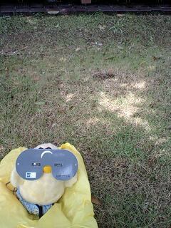木漏れ日観測法