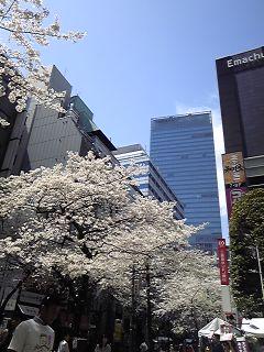 東京で花見